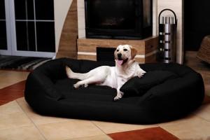 Canapé pour chien dogue de Bordeaux