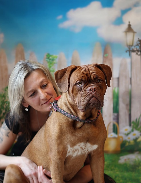éducation dogue de bordeaux