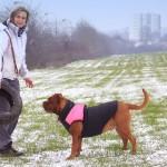 Sport Canin - Dogue de Bordeaux