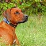 comment dresser un chien qui necoute pas