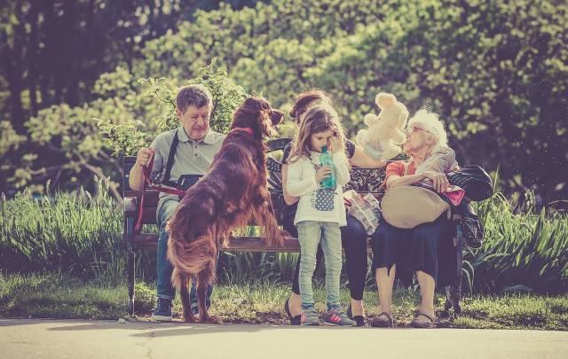Comment éduquer un dogue de bordeaux
