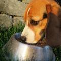alimentation bio chien